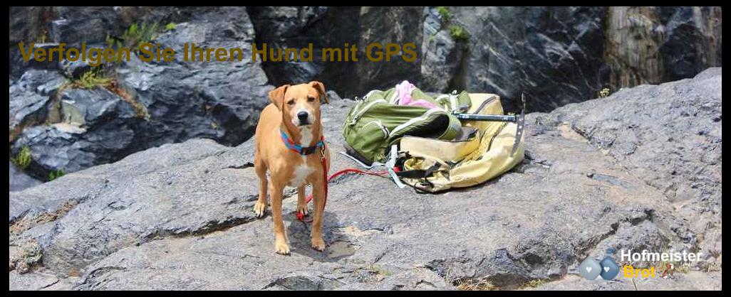 Verfolgen Sie Ihren Hund mit GPS